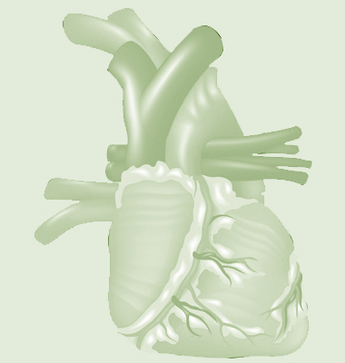 human heart vector_bw